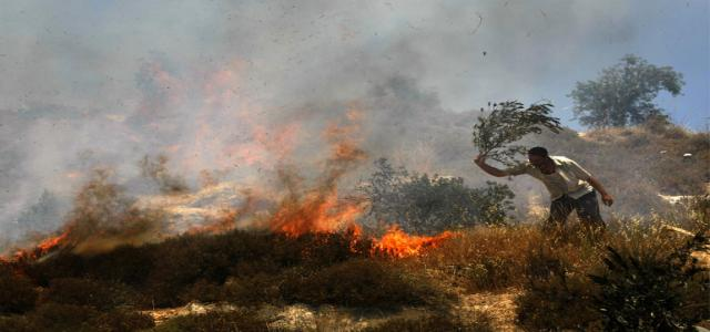 Zionist settlers burn olive fields, run over a youth