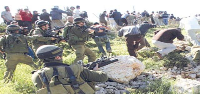IOF shelling wounds 3 Palestinian farmers